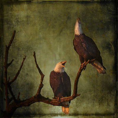 Bald Eagle Serenade Poster by Wes and Dotty Weber