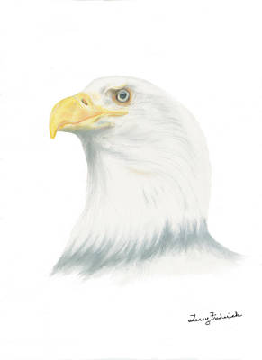 Poster featuring the drawing Bald Eagle by Terry Frederick