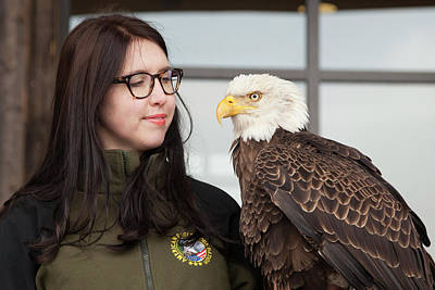 Bald Eagle With Handler Poster by Jim West