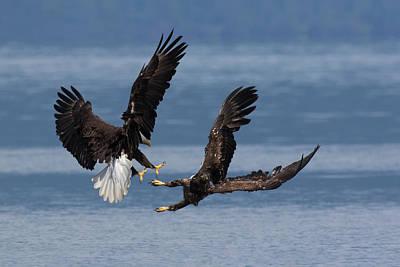 Bald Eagles, Dispute Poster