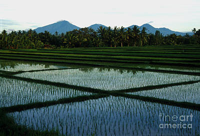 Bali Rice Paddies Poster by Jerry McElroy