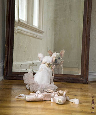 Ballerina Bulldog Poster by Lisa Jane