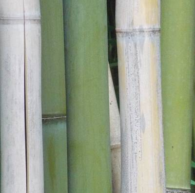 Bamboo 2 Poster