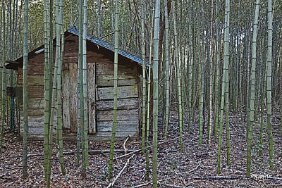 Bamboo Abandoned House Old Shed - Overtaken Poster by Rebecca Korpita