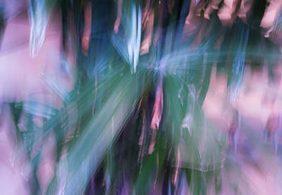 Poster featuring the photograph Bamboo Explosion by Beverly Parks