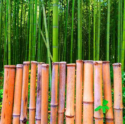Poster featuring the photograph Bamboo Fence by Julia Ivanovna Willhite