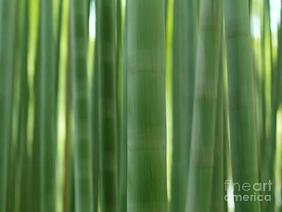 Bamboo Forest Abstract Closeup Of Stems Poster