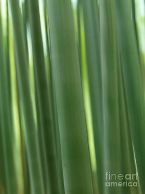 Bamboo Forest Abstract Closeup Poster