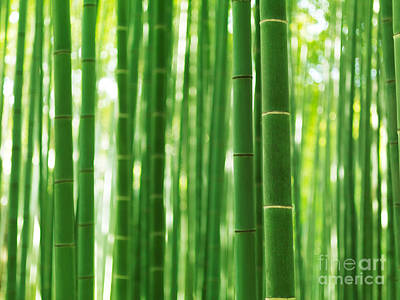 Bamboo Forest Culms Closeup Abstract Background Poster