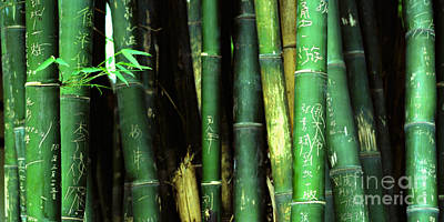 Bamboo Graffiti Pano - Sichuan Province Poster by Anna Lisa Yoder