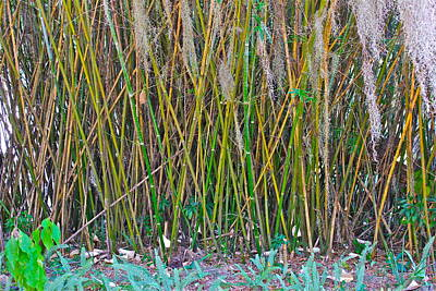 Poster featuring the photograph Bamboo by Lorna Maza