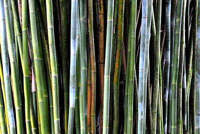 Poster featuring the photograph Bamboo Rainbow by Jodi Terracina