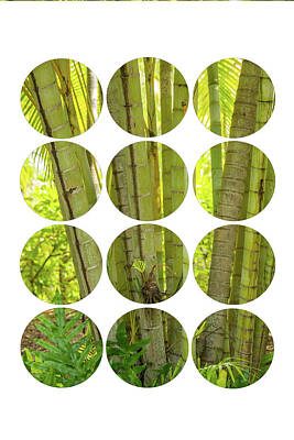 Bamboo Trees Poster by Ramona Murdock