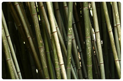 Bamboo Wall Poster by Davina Washington