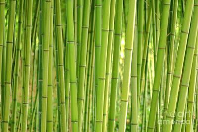 Bamboorama  Poster