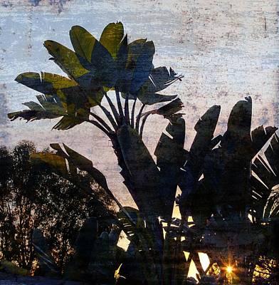 Banana Palms Poster