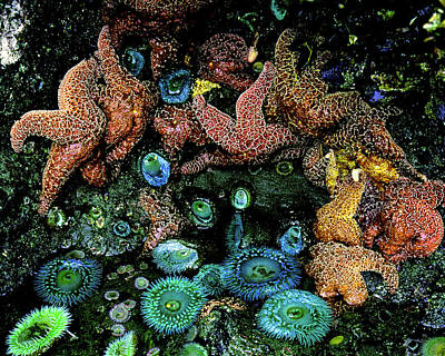 Bandon Beach Oregon Pacific Tidal Pool Poster