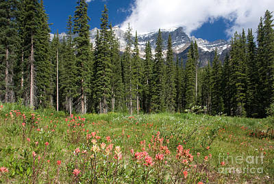Poster featuring the photograph Banff Wildflowers by Chris Scroggins