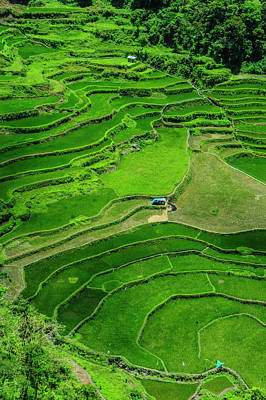 Bangaan In The Rice Terraces Of Banaue Poster by Michael Runkel