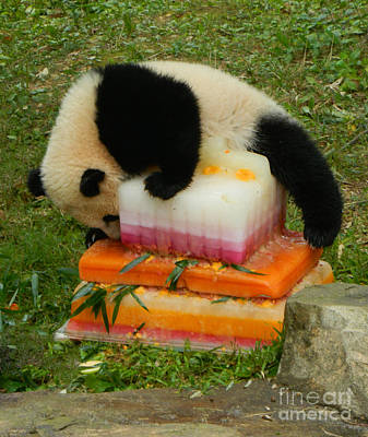 Bao Bao Climbing Mt. Saint Birthday Cake Poster by Emmy Marie Vickers