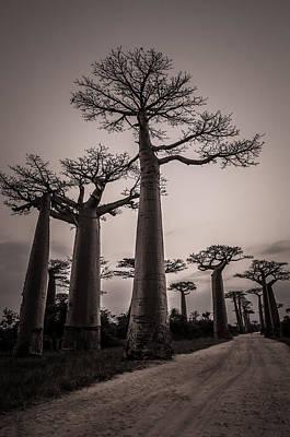 Baobab Avenue Poster