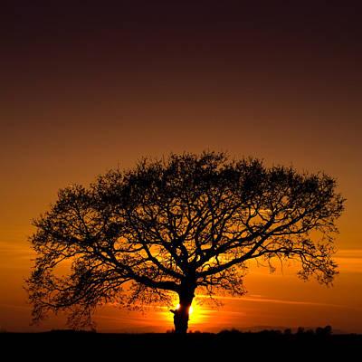 Baobab Poster by Davorin Mance