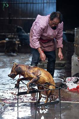 Barbecued Dog Carcass In A Chinese Market Poster