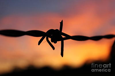 Poster featuring the photograph Barbed Silhouette by Vicki Spindler