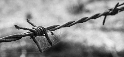 Barbwire And Spider's Web Black And White Poster by Kaleidoscopik Photography