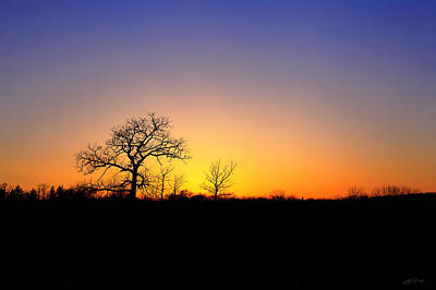 Bare Oak In Spring Sunset Poster