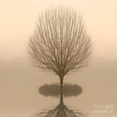 Bare Tree In Fog At Dawn Poster by Cheryl Casey