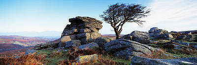 Bare Tree Near Rocks, Haytor Rocks Poster