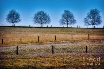 Bare Trees And Fence Posts Poster by Henry Kowalski
