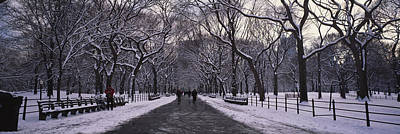 Bare Trees In A Park, Central Park, New Poster