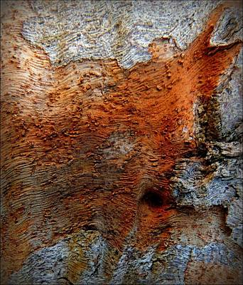 Bark Abstract Poster by Denise Clark