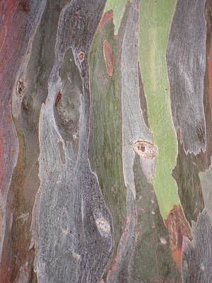 Poster featuring the photograph Bark Of Tree, San Juan by Jean Marie Maggi