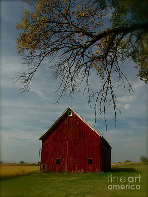 Barn And Box Elder Poster by Tim Good