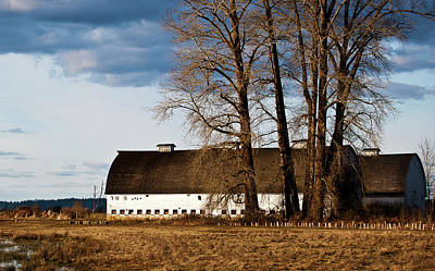 Barn And Trees Poster by Ron Roberts