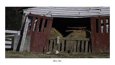 Barn Cats Poster by Gina Munger