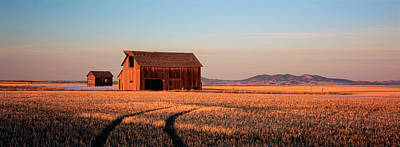 Barn In A Field, Hobson, Montana, Usa Poster
