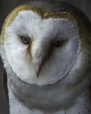 Barn Owl 2014-001 Poster