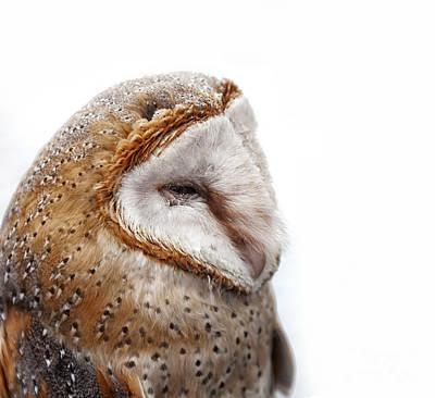 Barn Owl Close Up Poster