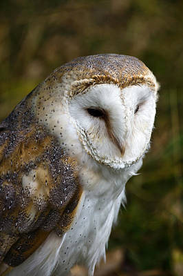 Barn Owl Poster by Scott Carruthers