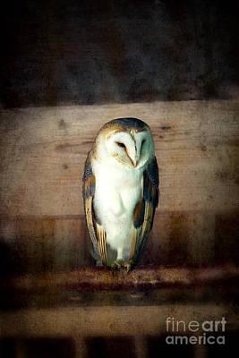 Barn Owl Vintage Poster