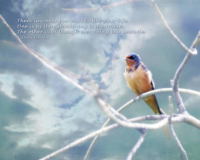 Barn Swallow On Blue Sky With Einstein Quote Poster