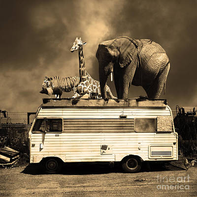 Barnum And Bailey Goes On A Road Trip 5d22705 Square Sepia Poster