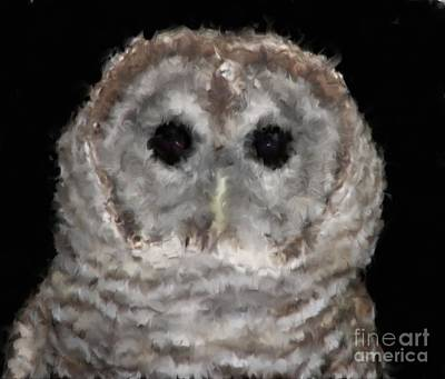 Barred Owl With Oil Painting Effect Poster by Rose Santuci-Sofranko