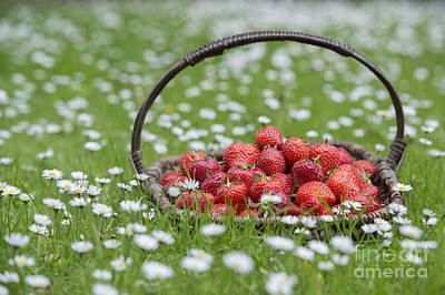 Basket Of Strawberries Poster by Tim Gainey