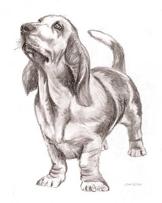Poster featuring the drawing Basset Hound Dog by Nan Wright