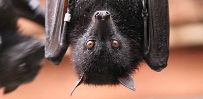 Bat Eyes Poster by Dan Sproul